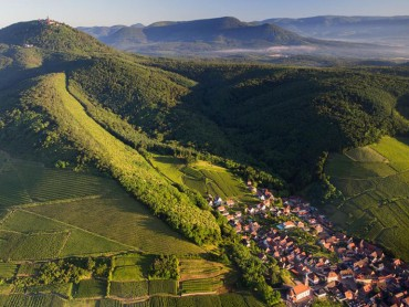 Alsace small group wine Tour from Strasbourg, vineyards & Grands crus route, tours&tasting, expert tour guide, Mon/Wed/Thur/Sat