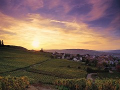 SMALL GROUP TOURS CHAMPAGNE