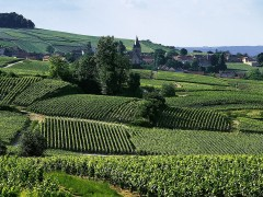 CHAMPAGNE WINE TOURS - 1 DAY
