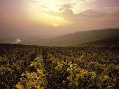 PRIVATE CHAMPAGNE WINE TOURS - 1 DAY