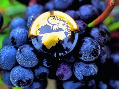 PRIVATE FRANCE WINE TOURS